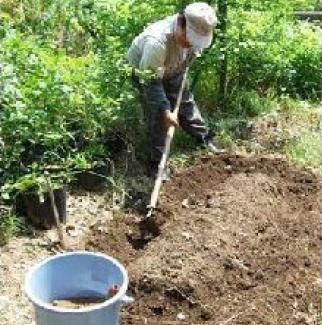 カボチャの植え付け.png