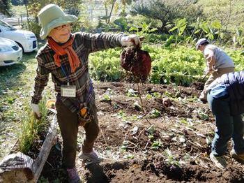 サツマイモ収穫.JPG