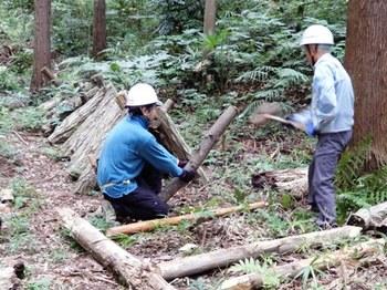 シイタケホダ木立ての修理.JPG