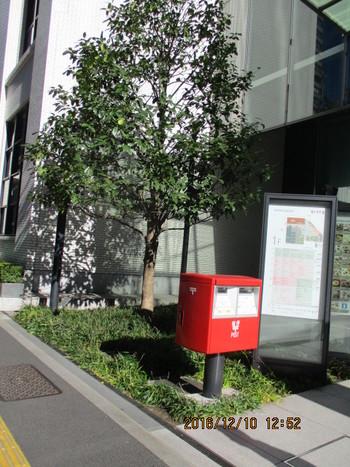タラヨウ・中央郵便局.JPG