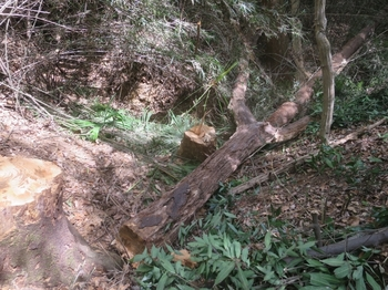 伐倒木で谷渡りの橋とする_2_640.jpg