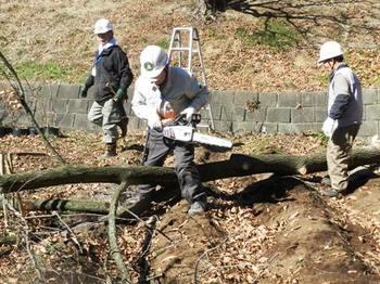 倒れた木の整理.JPG
