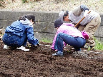 大根の畝作り.JPG