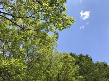 新緑のなな山_20170429.jpg