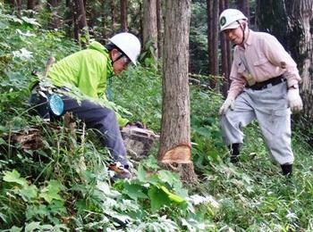 枯れ木の伐倒.jpg