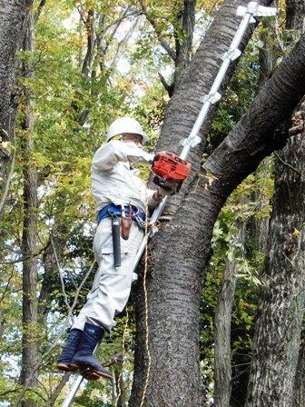 梯子で枝を切る.JPG