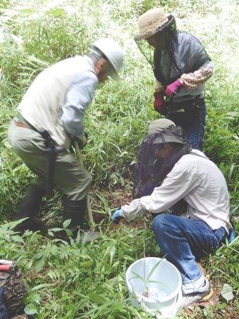 植物標本の採取.JPG