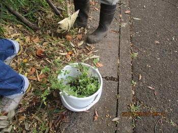 植物標本採取.JPG