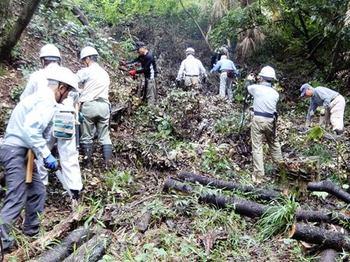 西の谷伐倒木の整理.JPG