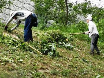 のり面の刈草を集める.jpg