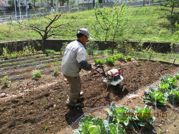 サトイモ畝作り.JPG
