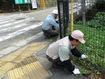 バス通り側の草むしり.jpg