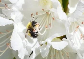 ミツバチ.jpg