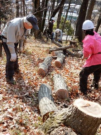 伐倒木でホダ木を.JPG