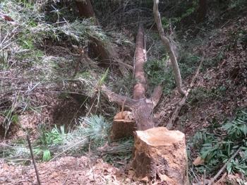伐倒木で谷渡りの橋とする_1_640.jpg