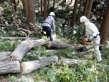 伐倒木の整頓.JPG