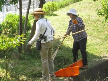 刈り草集め.jpg