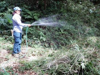 刈草に水をかける.JPG