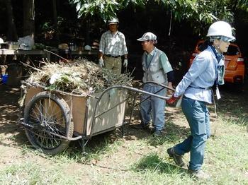 刈草の運搬.JPG