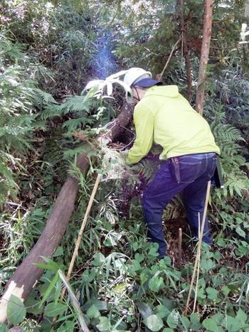 台風による倒木の処理.JPG