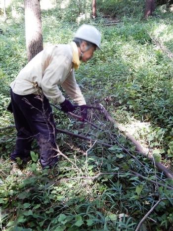 台風による落枝の処理.JPG