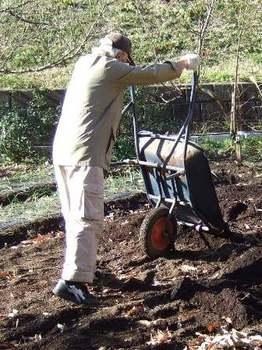 堆肥を畑に運ぶ.JPG