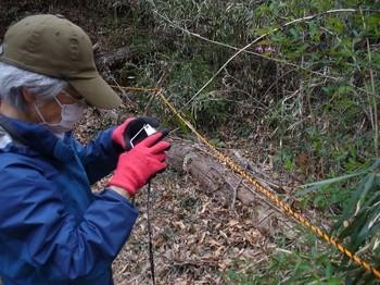 山野草をカメラに収める.jpg
