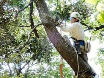 折損木の上部を切り落とす.JPG