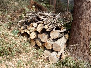 整理された伐倒木2.JPG