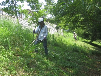 斜面の草刈り.jpg