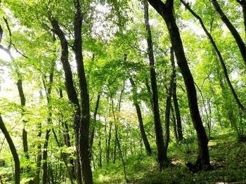 木漏れ日_西の山.jpg