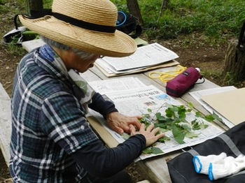 植物標本作り.jpg