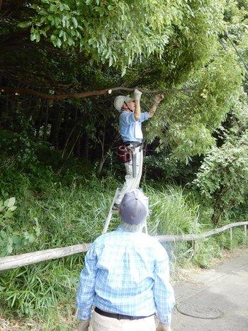 歩道にはみ出した木の剪定.JPG