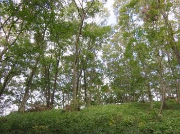 秋の林間.JPG