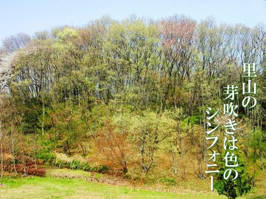 里山の芽吹きは色のシンフォニー.png